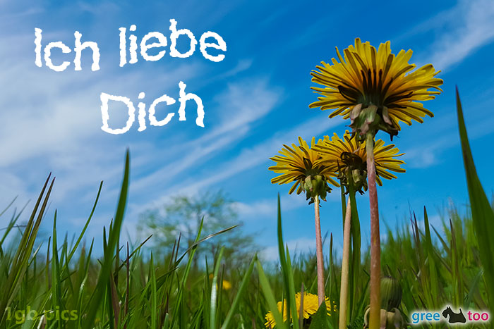 Loewenzahn Himmel Ich Liebe Dich Bild - 1gb.pics