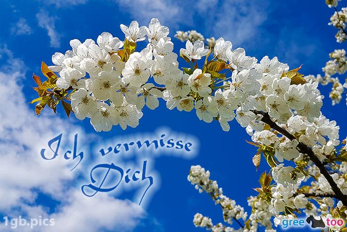 Kirschblueten Ich Vermisse Dich Bild - 1gb.pics