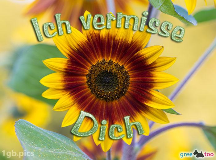 Sonnenblume Ich Vermisse Dich Bild - 1gb.pics