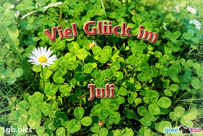 Klee Gaensebluemchen Viel Glueck Im Juli Bild - 1gb.pics