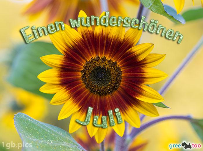 Sonnenblume Einen Wunderschoenen Juli Bild - 1gb.pics