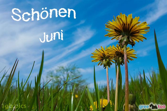 Loewenzahn Himmel Schoenen Juni Bild - 1gb.pics