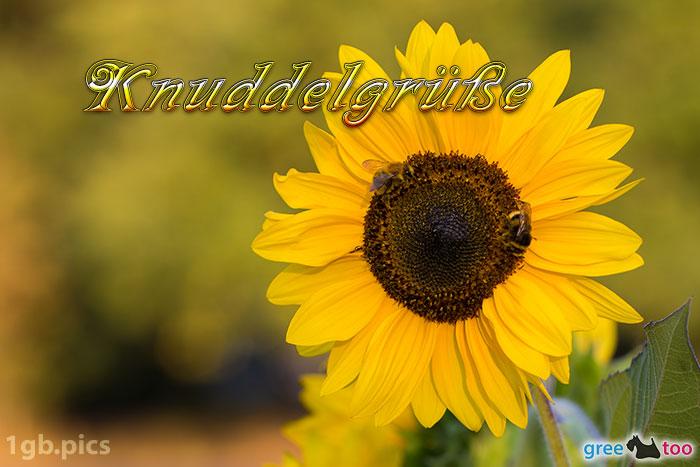 Sonnenblume Bienen Knuddelgruesse Bild - 1gb.pics
