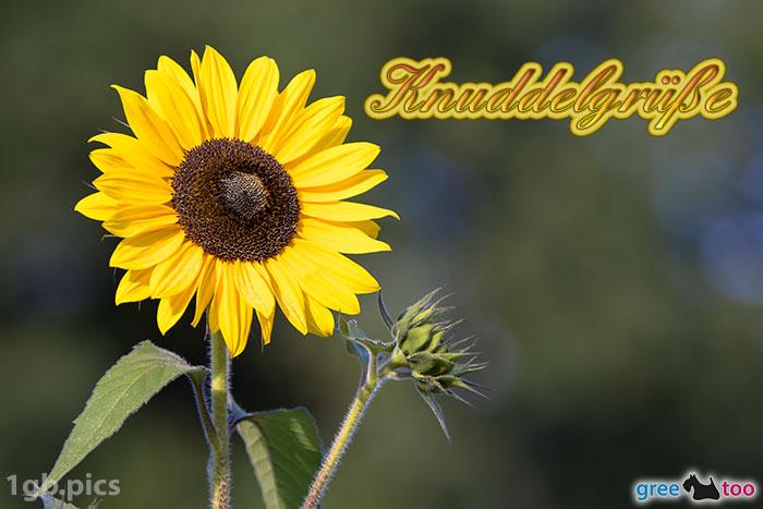 Sonnenblume Knuddelgruesse Bild - 1gb.pics