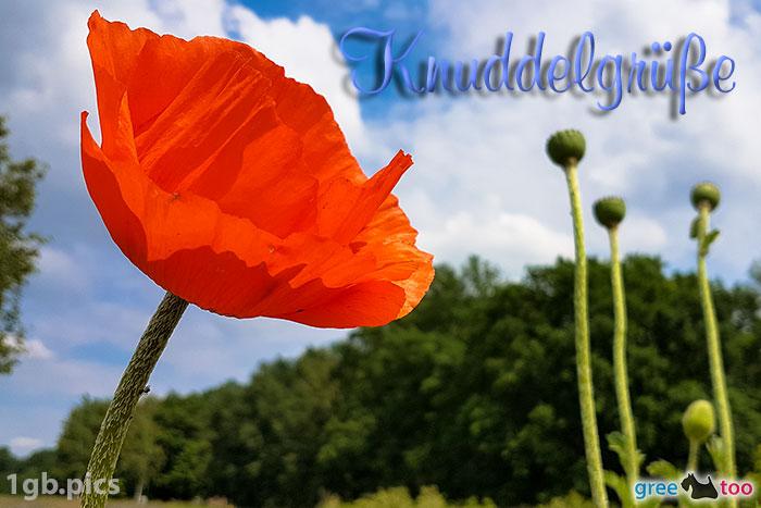 Mohnblume Knuddelgruesse Bild - 1gb.pics