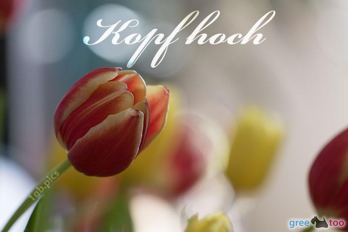 Kopf Hoch Bild - 1gb.pics