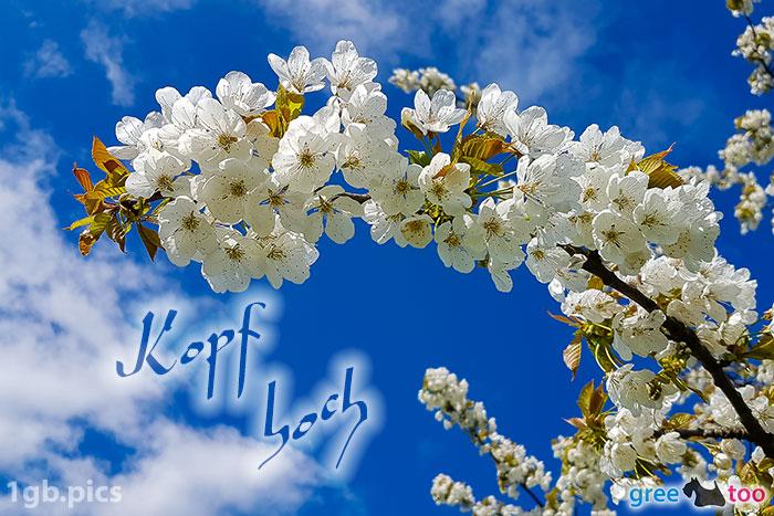 Kirschblueten Kopf Hoch Bild - 1gb.pics