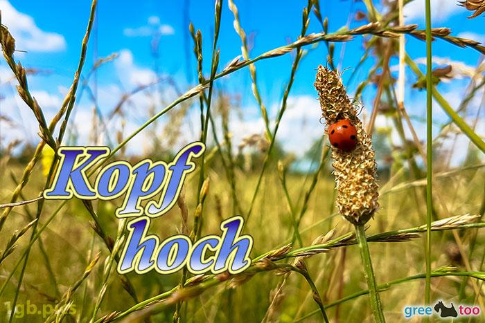Marienkaefer Kopf Hoch Bild - 1gb.pics