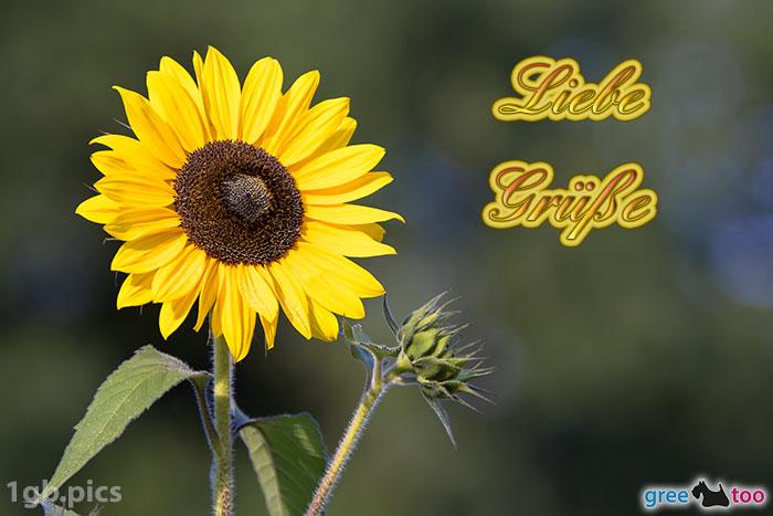 Sonnenblume Liebe Gruesse Bild - 1gb.pics