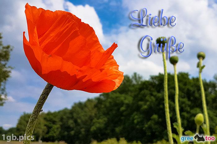 Mohnblume Liebe Gruesse Bild - 1gb.pics