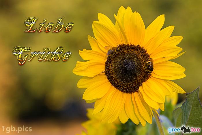 Sonnenblume Bienen Liebe Gruesse Bild - 1gb.pics