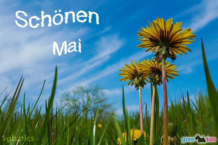 Loewenzahn Himmel Schoenen Mai Bild - 1gb.pics