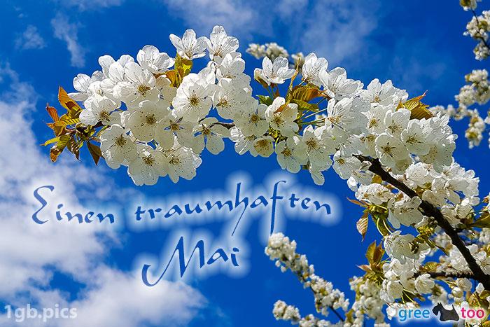 Kirschblueten Einen Traumhaften Mai Bild - 1gb.pics
