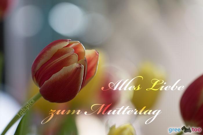 Alles Liebe Zum Muttertag Bild - 1gb.pics