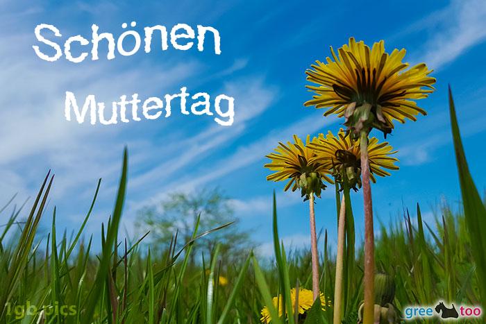 Loewenzahn Himmel Schoenen Muttertag Bild - 1gb.pics