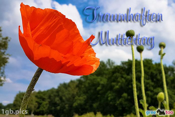 Mohnblume Traumhaften Muttertag Bild - 1gb.pics