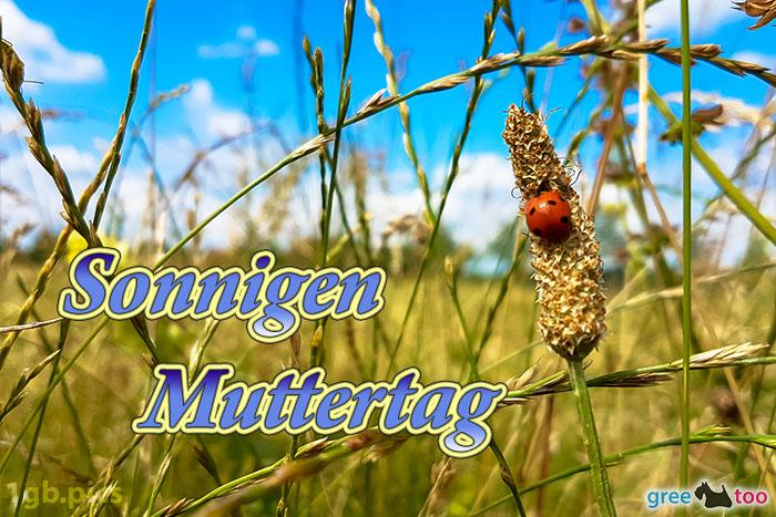 Marienkaefer Sonnigen Muttertag Bild - 1gb.pics