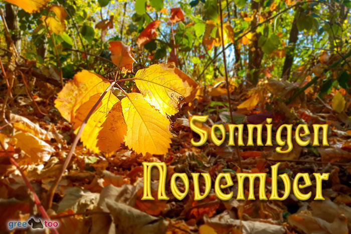 Sonnigen November Bild - 1gb.pics