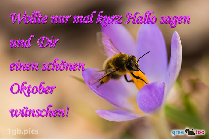 Krokus Biene Einen Schoenen Oktober Bild - 1gb.pics