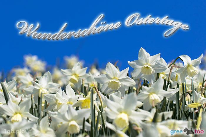 Wunderschoene Ostertage Bild - 1gb.pics
