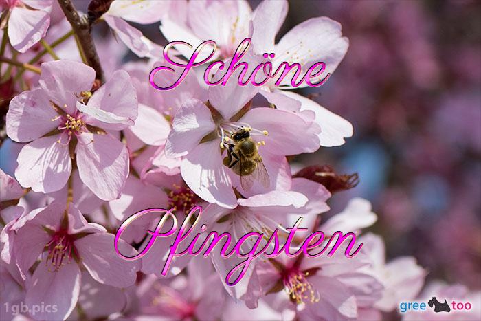 Schoene Pfingsten Bild - 1gb.pics