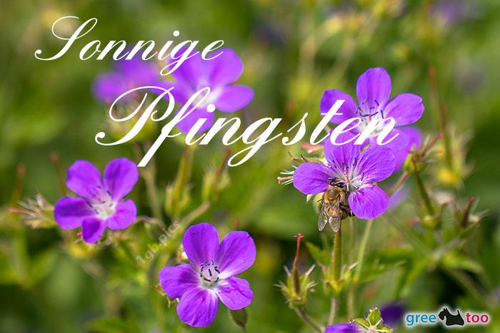 Sonnige Pfingsten Bild - 1gb.pics