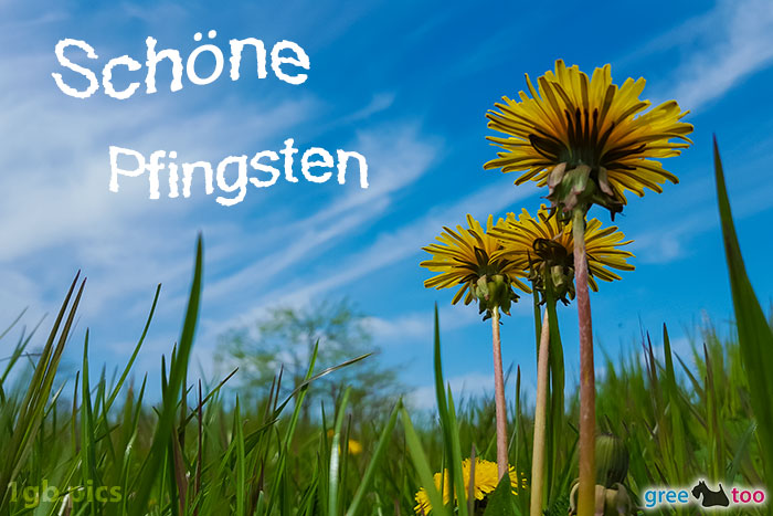 Loewenzahn Himmel Schoene Pfingsten Bild - 1gb.pics