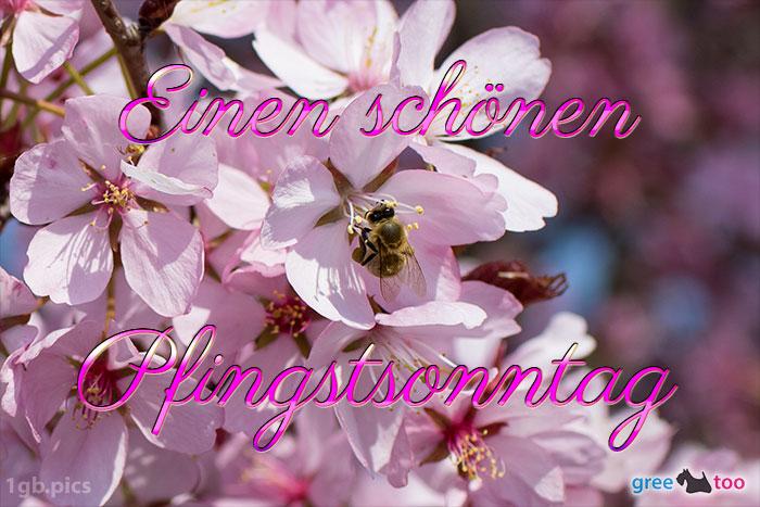 Einen Schoenen Pfingstsonntag Bild - 1gb.pics