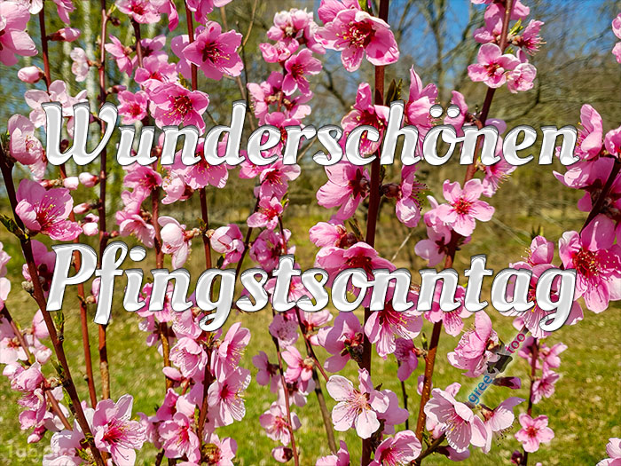 Wunderschoenen Pfingstsonntag Bild - 1gb.pics