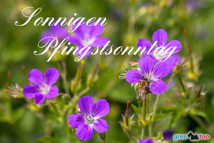 Sonnigen Pfingstsonntag Bild - 1gb.pics
