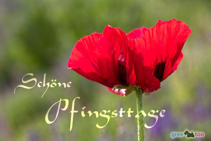 Sonnige Pfingsttage Bild - 1gb.pics