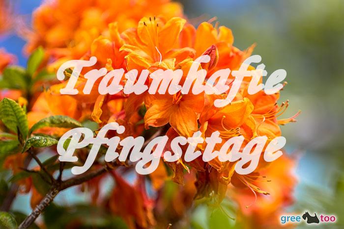 Traumhafte Pfingsttage Bild - 1gb.pics