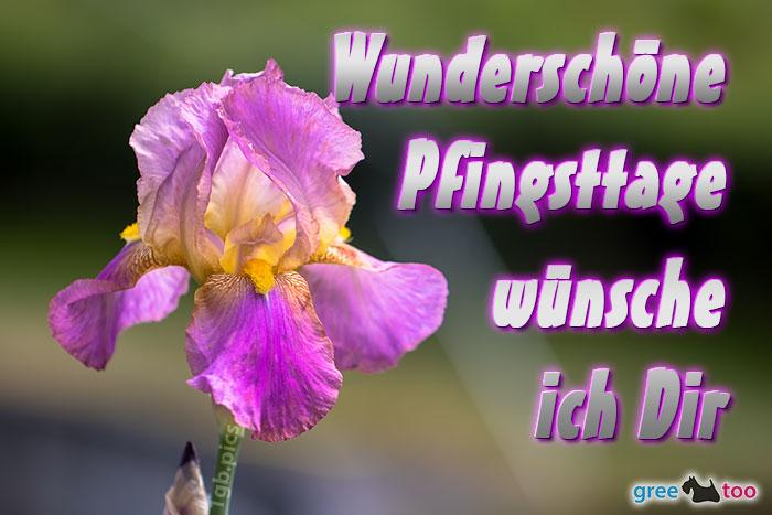 Wunderschoene Pfingsttage Bild - 1gb.pics