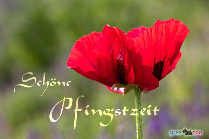 Schoene Pfingstzeit Bild - 1gb.pics