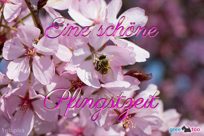 Eine Schoene Pfingstzeit Bild - 1gb.pics