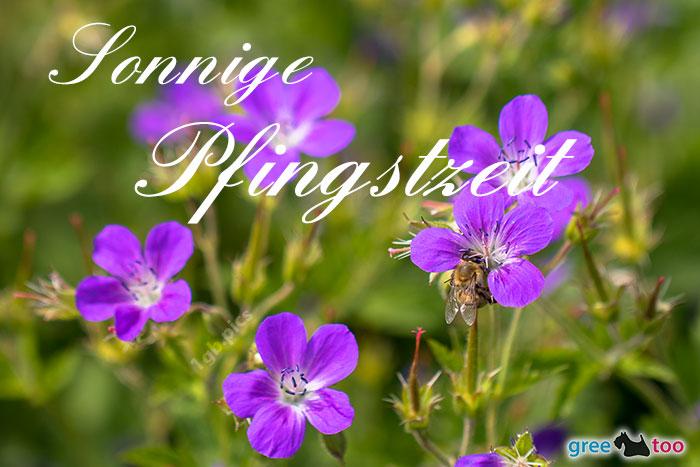 Sonnige Pfingstzeit Bild - 1gb.pics