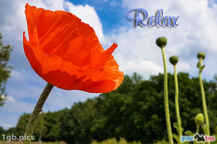 Mohnblume Relax Bild - 1gb.pics