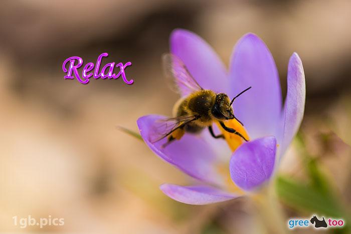 Krokus Biene Relax Bild - 1gb.pics