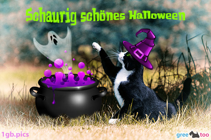 Katze Schaurig Schoenes Halloween Bild - 1gb.pics
