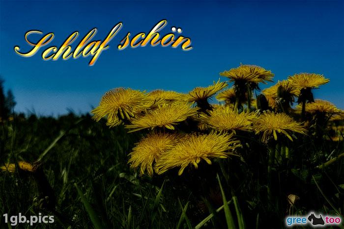 Loewenzahn Schlaf Schoen Bild - 1gb.pics