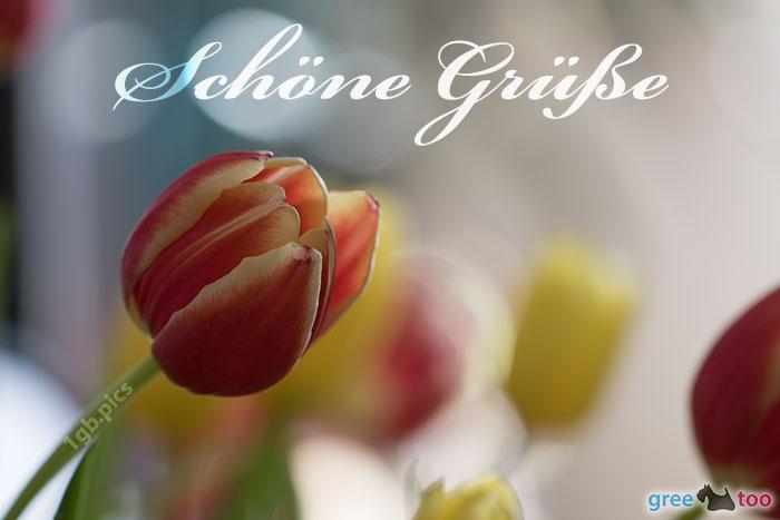 Schoene Gruesse Bild - 1gb.pics