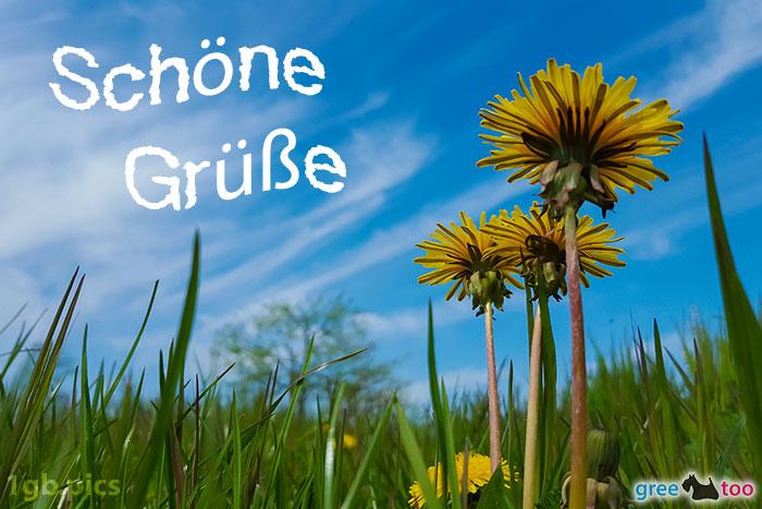 Loewenzahn Himmel Schoene Gruesse Bild - 1gb.pics