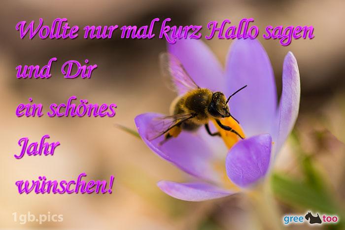 Krokus Biene Ein Schoenes Jahr Bild - 1gb.pics
