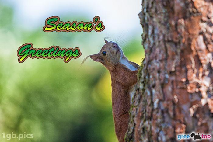 Eichhoernchen Seasons Greetings Bild - 1gb.pics