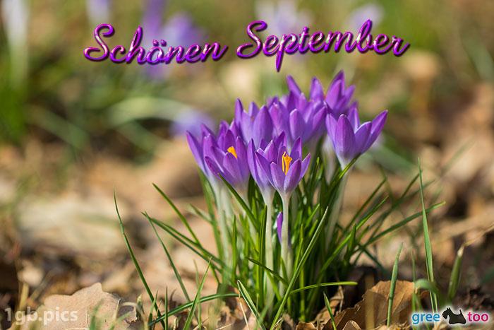 Krokusstaude Schoenen September Bild - 1gb.pics