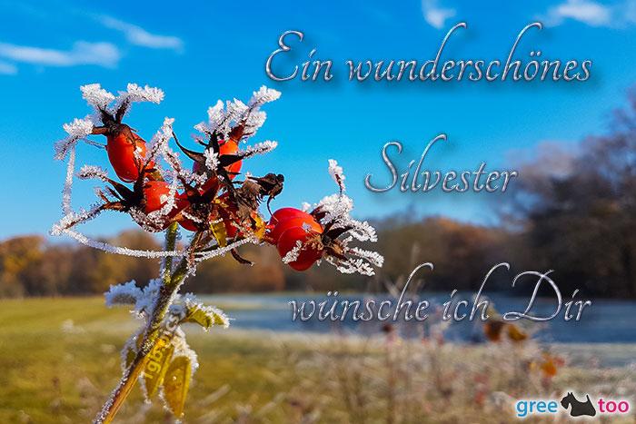 Ein Wunderschoenes Silvester Bild - 1gb.pics