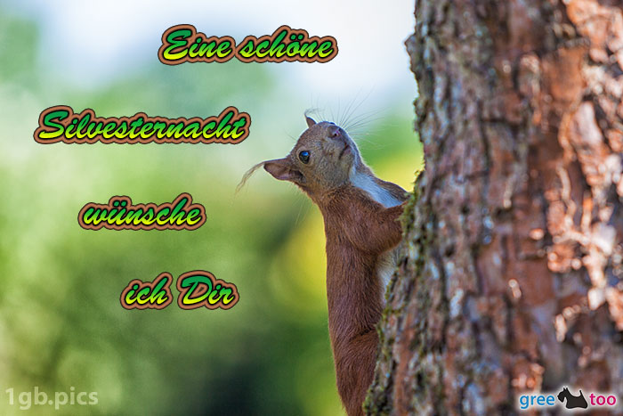 Eichhoernchen Eine Schoene Silvesternacht Bild - 1gb.pics