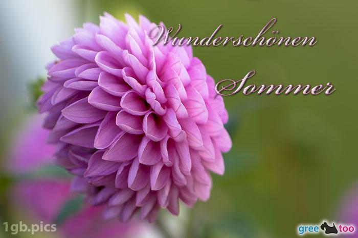Lila Dahlie Wunderschoenen Sommer Bild - 1gb.pics