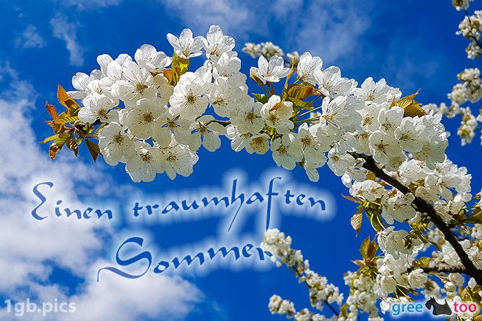Kirschblueten Einen Traumhaften Sommer Bild - 1gb.pics