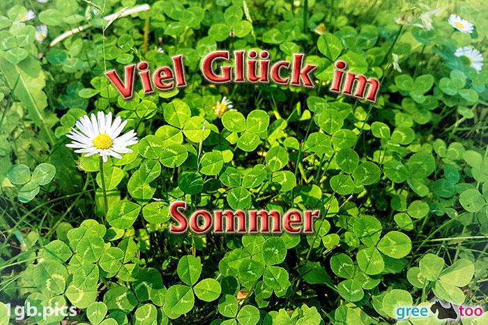 Klee Gaensebluemchen Viel Glueck Im Sommer Bild - 1gb.pics